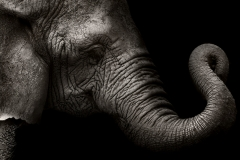 Animals_021